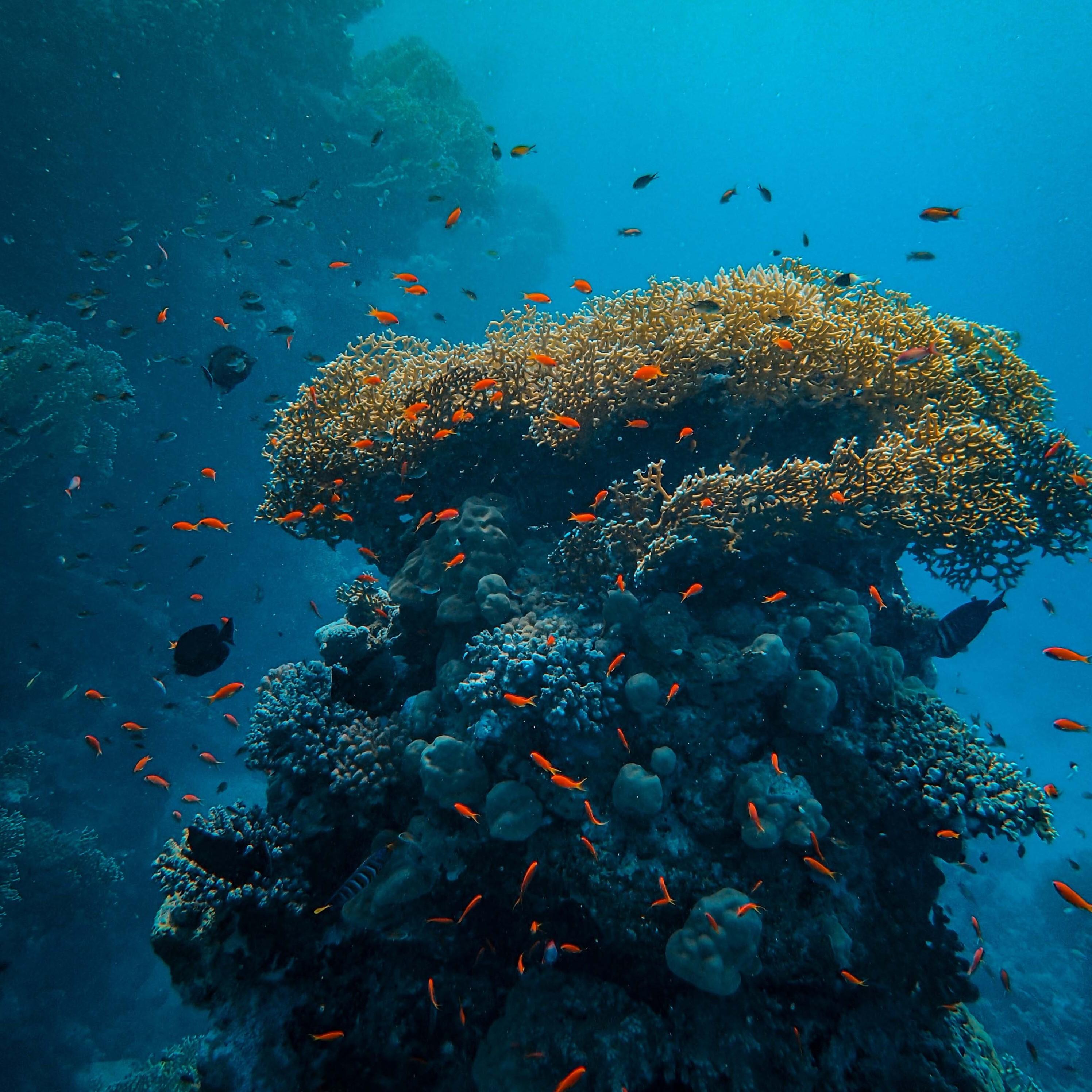 مسار تنظيف أعماق البحر